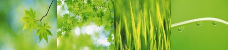 Green Leaves Widescreen Wallpapers